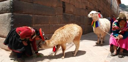 Cusco_Lama
